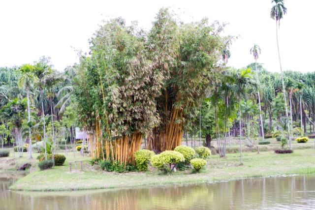 The External Developmen Excursion was to Khao Hin Sorn